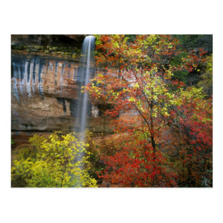 Waterfall, bigtooth maple Acer Postcard