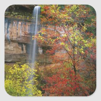 Waterfall, bigtooth maple Acer Square Sticker