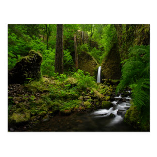 Waterfall in a Forest of the Pacific Northwest Postcard