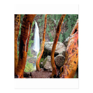 Waterfall Madrone Mill Recreation Area Postcard