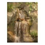 Waterfall Postcard!