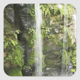 Waterfall, Temperate rainforest, New Zealand. Square Sticker