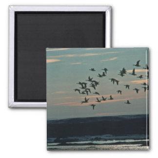 Waterfowl, Arctic National Wildlife Refuge Fridge Magnets
