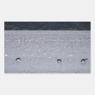 Waterfowl In Flight Rectangular Sticker
