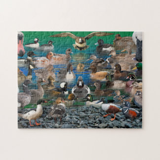 Waterfowl of North America Jigsaw Puzzle
