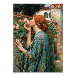 Waterhouse el alma de la impresión del rosa cojinete