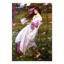 Waterhouse Windflowers Print