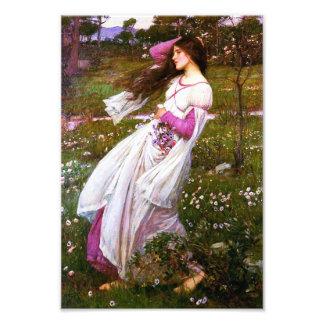 Waterhouse Windflowers Print Photo Print