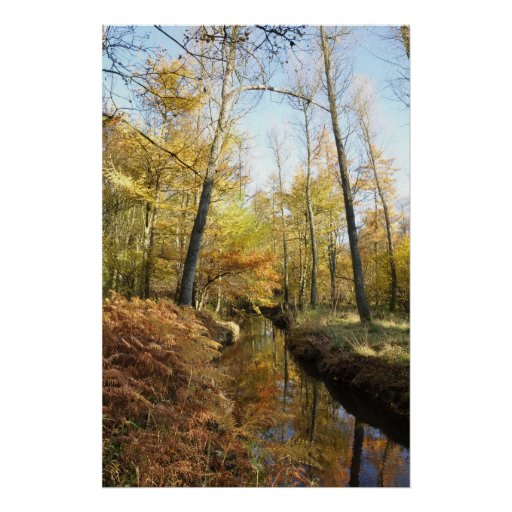 Waterhouses Autumn Woods Posters