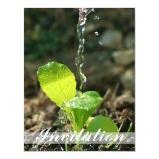 watering sapling card