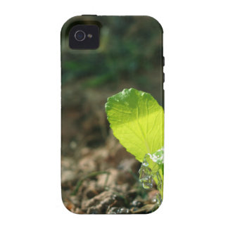 watering sapling case for the iPhone 4