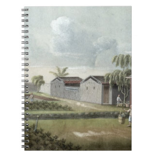 Watering tea plants (w/c on paper) spiral note books