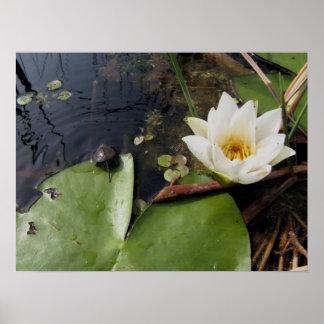 Waterlilie y pequeña tortuga impresiones