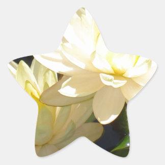 waterlilies amarillos calcomanías forma de estrella personalizadas