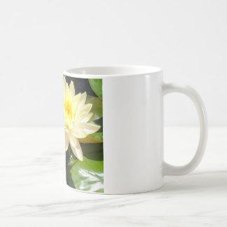 waterlilies amarillos taza de café