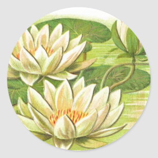 Waterlilies blanco etiquetas redondas