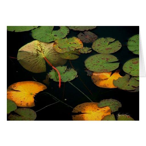 Waterlilies Cards