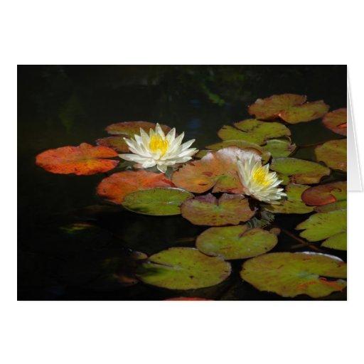 Waterlilies III Greeting Cards