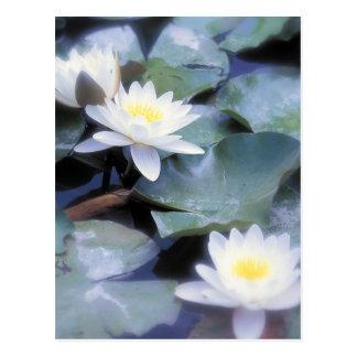 Waterlilies postcards