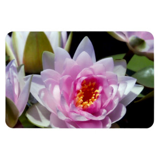 Waterlilies Rectangular Photo Magnet