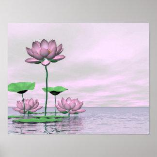 Waterlilies y flores de loto rosados póster