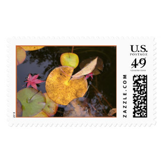 Waterlillies in Fall Postage