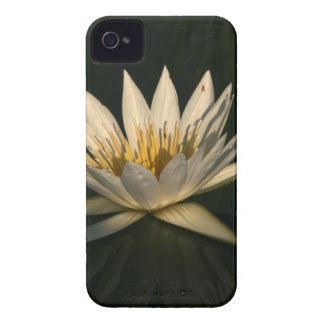Waterlilly 7 Case-Mate iPhone 4 case
