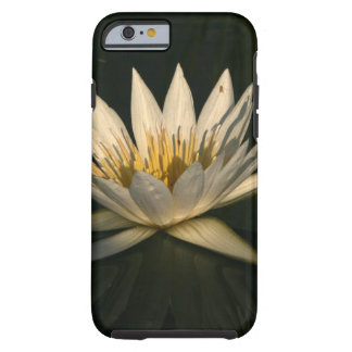 Waterlilly 7 tough iPhone 6 case