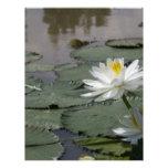 Waterlilly Membretes Personalizados