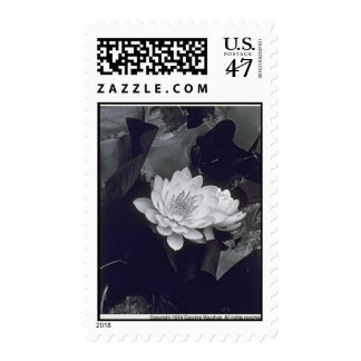waterlily258x321 postage stamp
