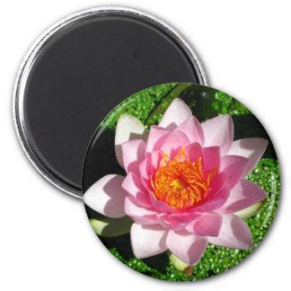 Waterlily 2 Inch Round Magnet