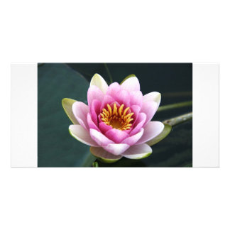 Waterlily Card