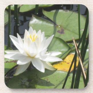 Waterlily Coaster