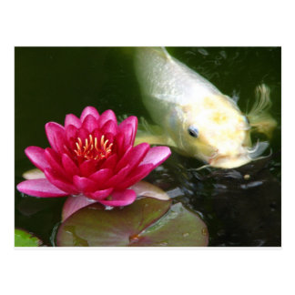 Waterlily con Koi Postal