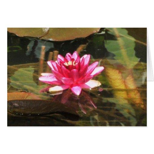 Waterlily Felicitación