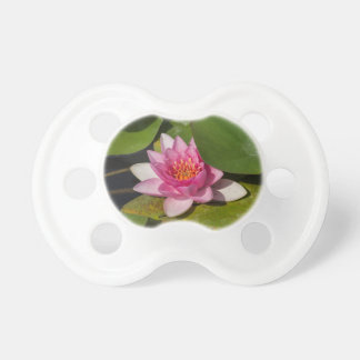 waterlily in the lake pacifier