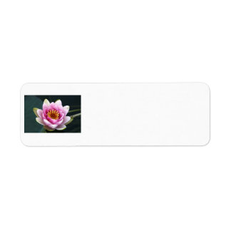 Waterlily Label