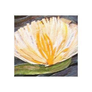Waterlily Impresiones En Lienzo Estiradas