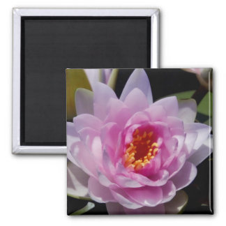 Waterlily Magnet