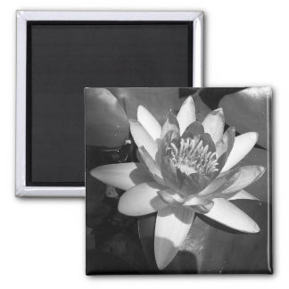 Waterlily 2 Inch Square Magnet