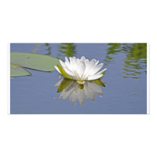Waterlily Mirrored Card