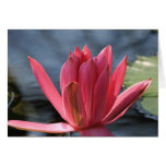 Waterlily Note Card
