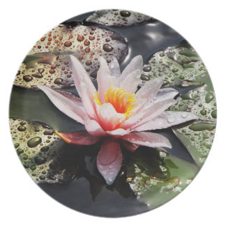 Waterlily - Plate