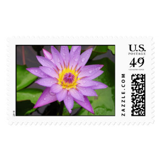 Waterlily Postage Stamps