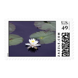 Waterlily Postage Stamp