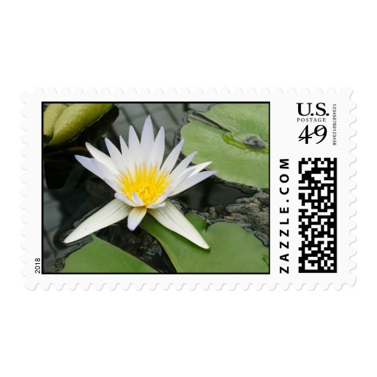Waterlily Postage