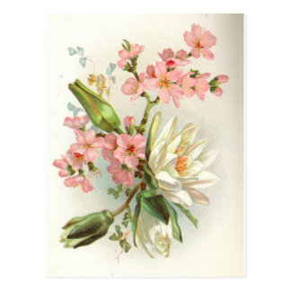 waterlily post cards