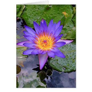 Waterlily púrpura y amarillo tarjeta de felicitación