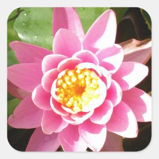 Waterlily rosado calcomanías cuadradases