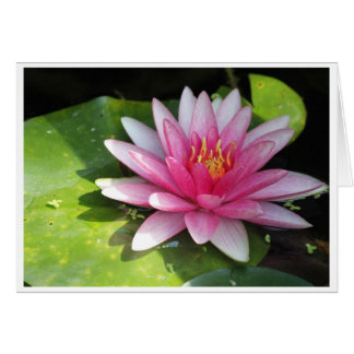 Waterlily rosado tarjeta de felicitación